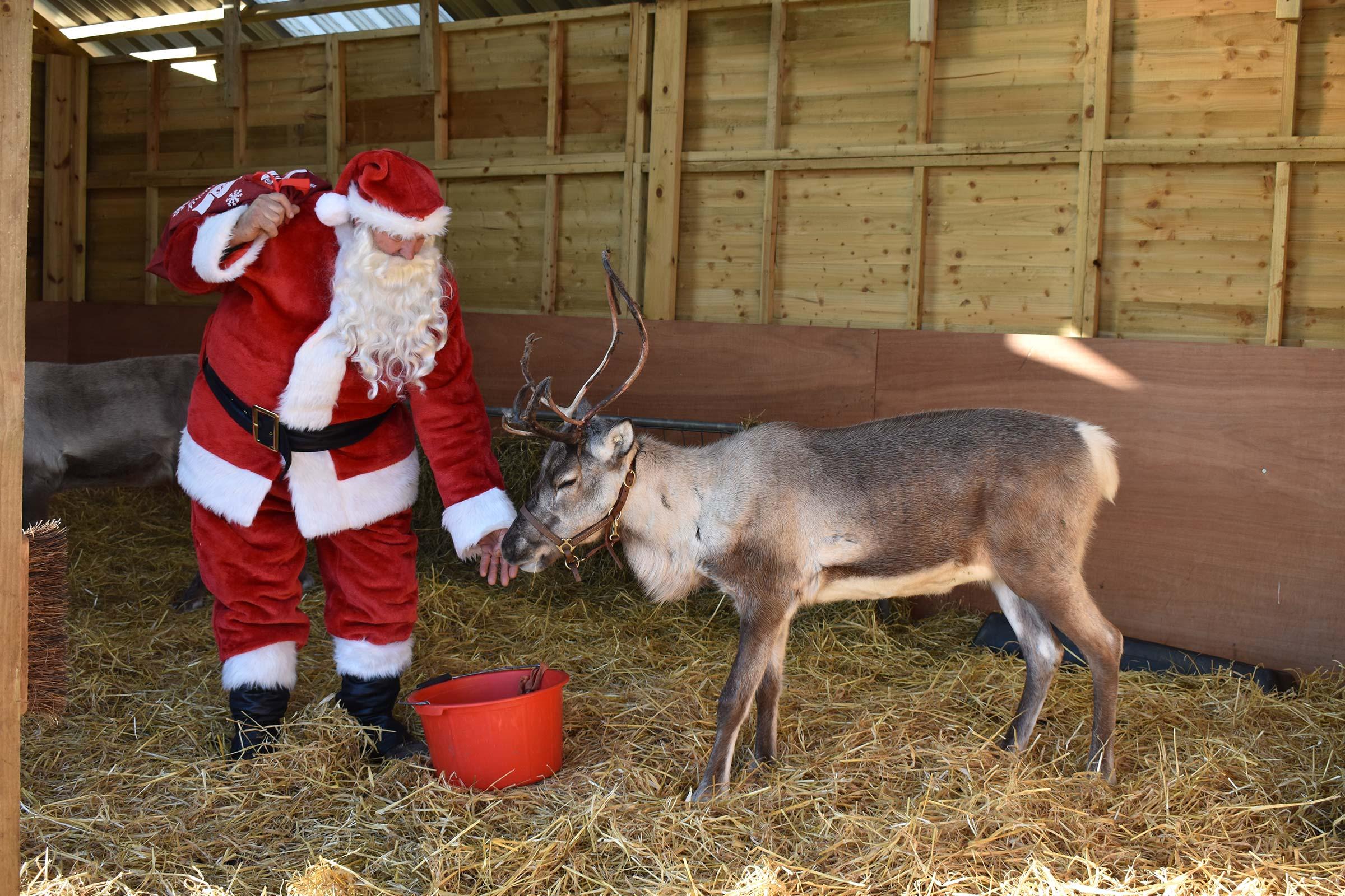 Santa feeding Reindeer
